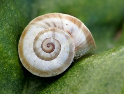 Snail, by Katja Schulz